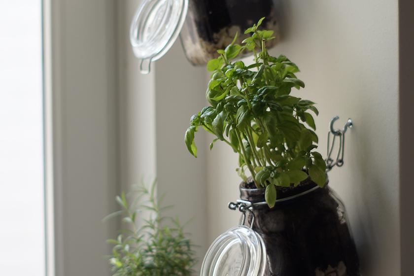 Basilikum wächst und gedeiht im DIY Kräutergarten