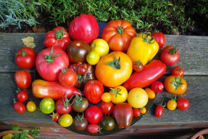 tomaten-mix-e1439649371988
