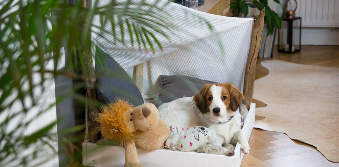 DIY Dog Shelter - Knut bekommt ein neues Plätzchen #diy #tutorial #stepbystep #anleitung #idee #hundehütte #hundehaus #indoor #interior #dog #amigaprincess
