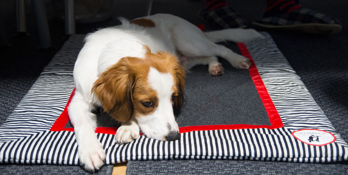 Takeover Knut: My home is my castle #kooiker #kooikerhondje #puppy #mylumpi #dog