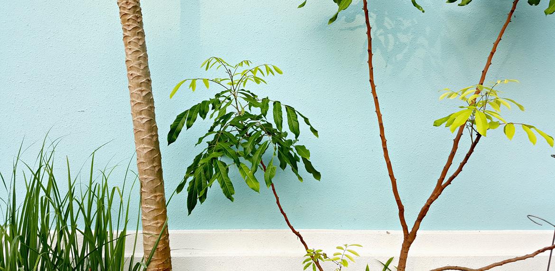 5 Gründe warum Pflanzen uns gut tun #plants #interior #wohnraum #zimmerpflanze #grünzeug #wohnen #living #essentials #amigaprincess