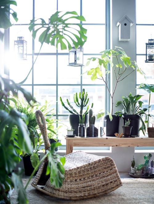 5 Gründe warum Pflanzen uns gut tun 2