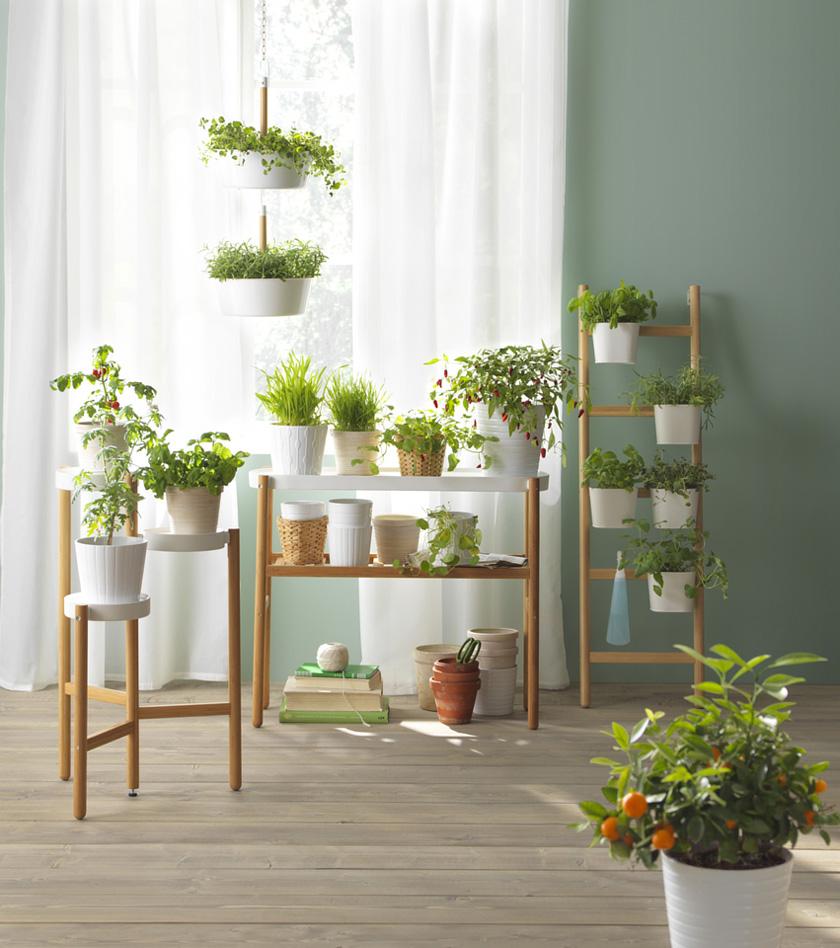 5 Gründe warum Pflanzen uns gut tun 3