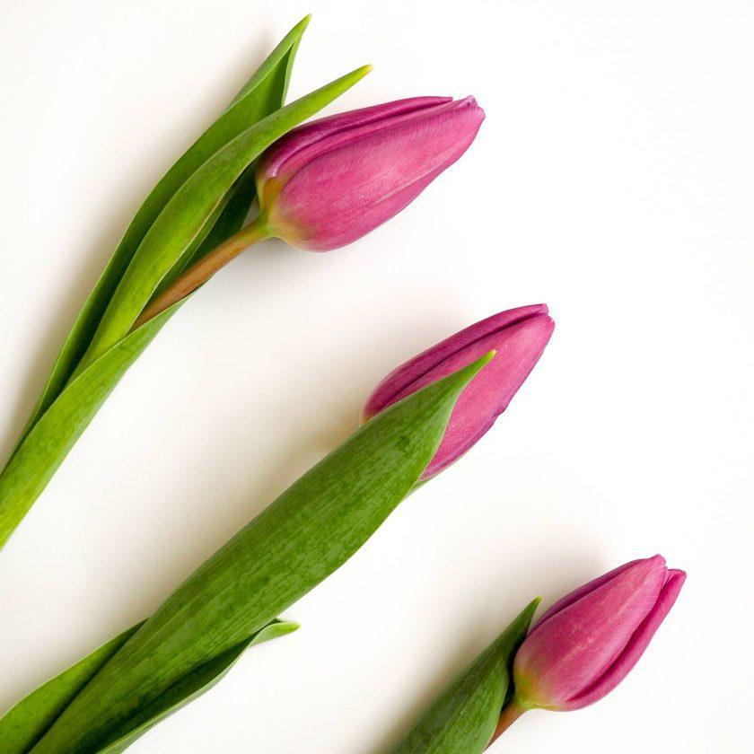 Fit in den Frühling* 1