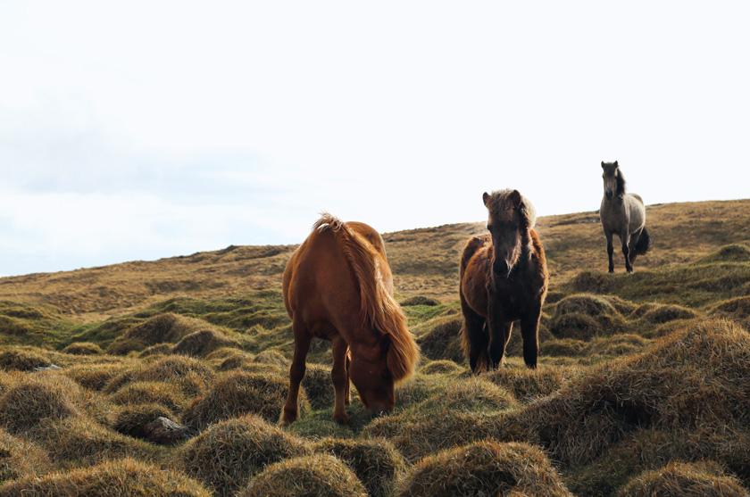 Island wir kommen - geplante Route + Kosten 3