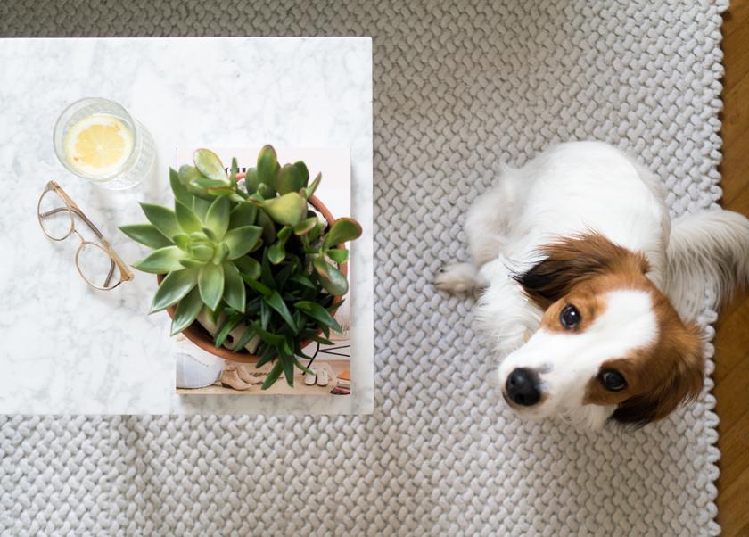 Wohnzimmer Update* - Hello mint & marble 13