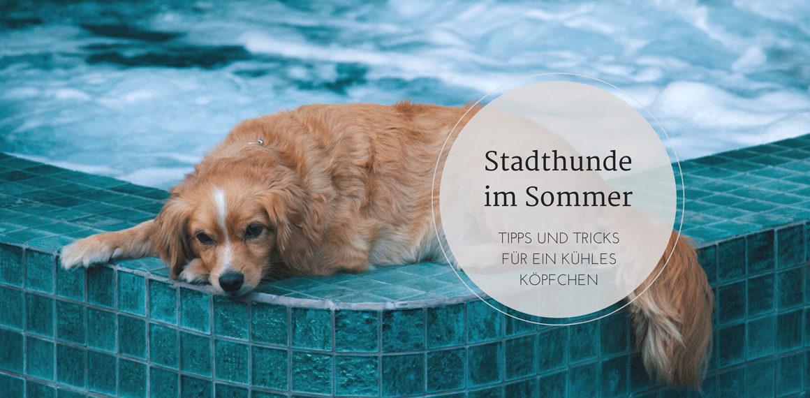 Stadthunde im Sommer - Tipps für ein kühles Köpfchen 1