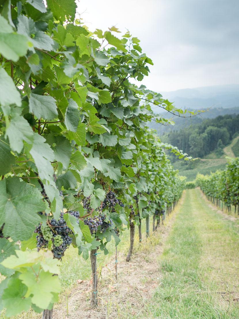 Die Südsteirische Weinstraße - meine Tipps 2