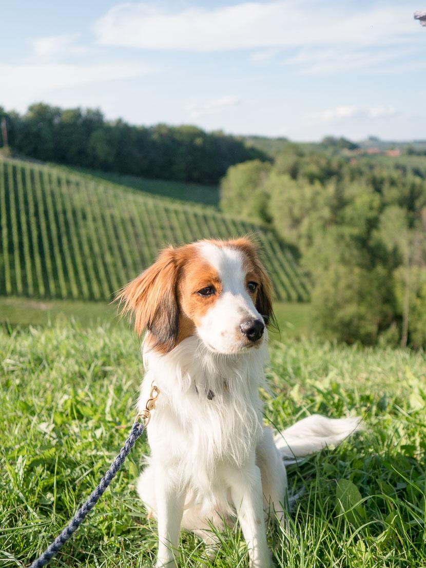 Die Südsteirische Weinstraße - meine Tipps 5