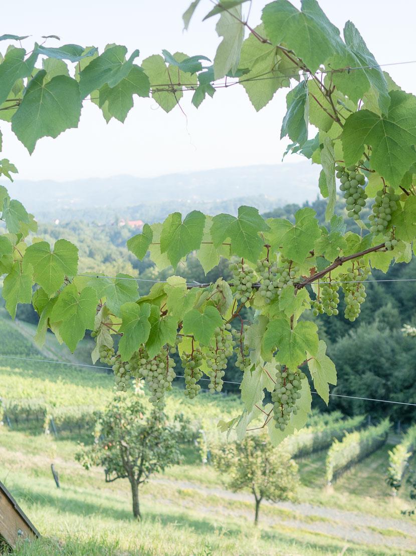 Die Südsteirische Weinstraße - meine Tipps 14