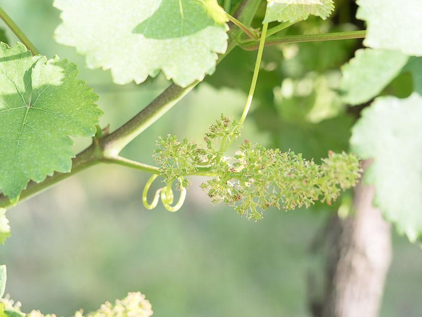 La Amistad - so kam es zu meinem eigenen Wein 3