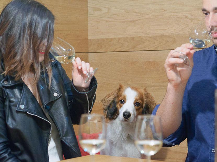 La Amistad - so kam es zu meinem eigenen Wein 7