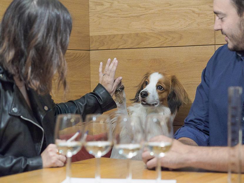La Amistad - so kam es zu meinem eigenen Wein 9