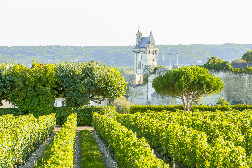 Urlaub in der Weinregion - das Loire Tal* 6