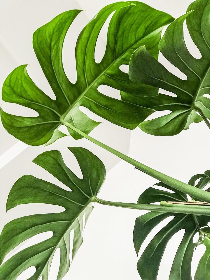 Zimmerpflanzen als Deko-Objekte - meine Favoriten 5