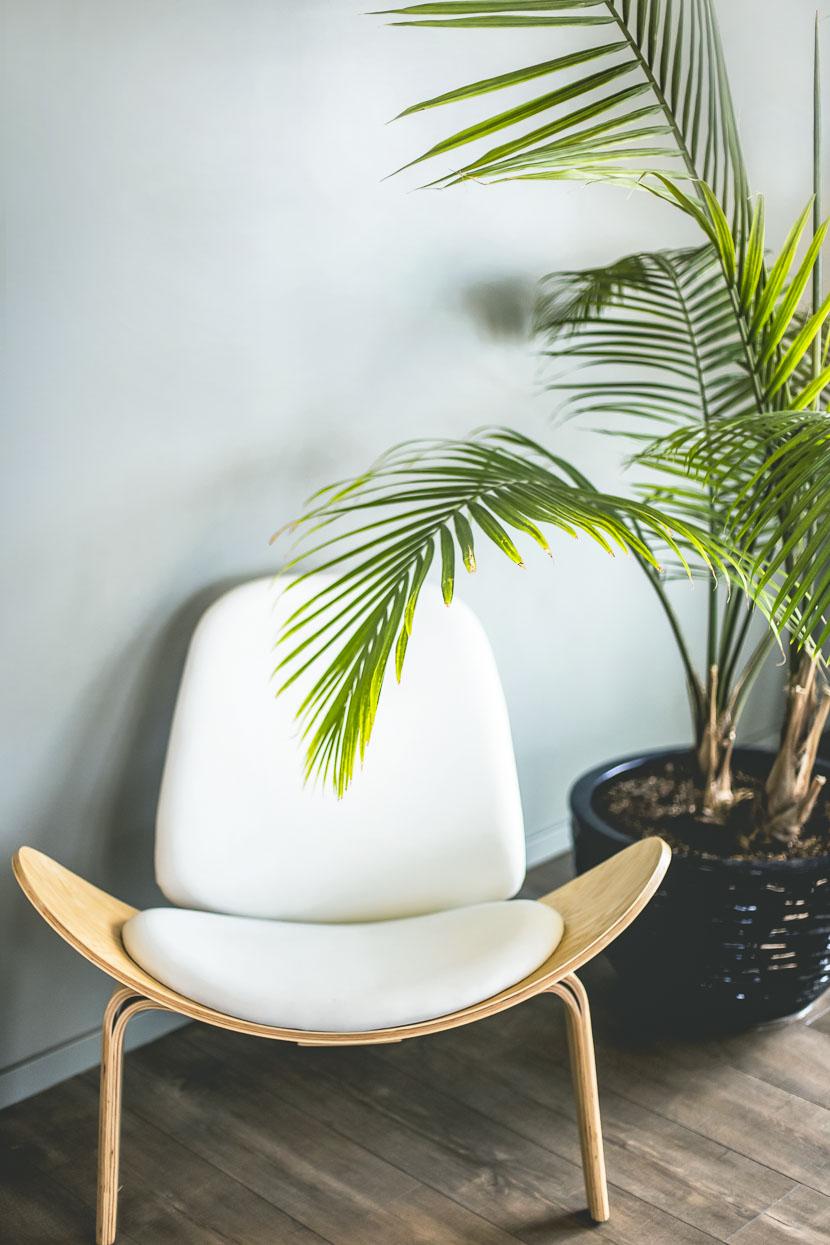 Zimmerpflanzen als Deko-Objekte - meine Favoriten 7