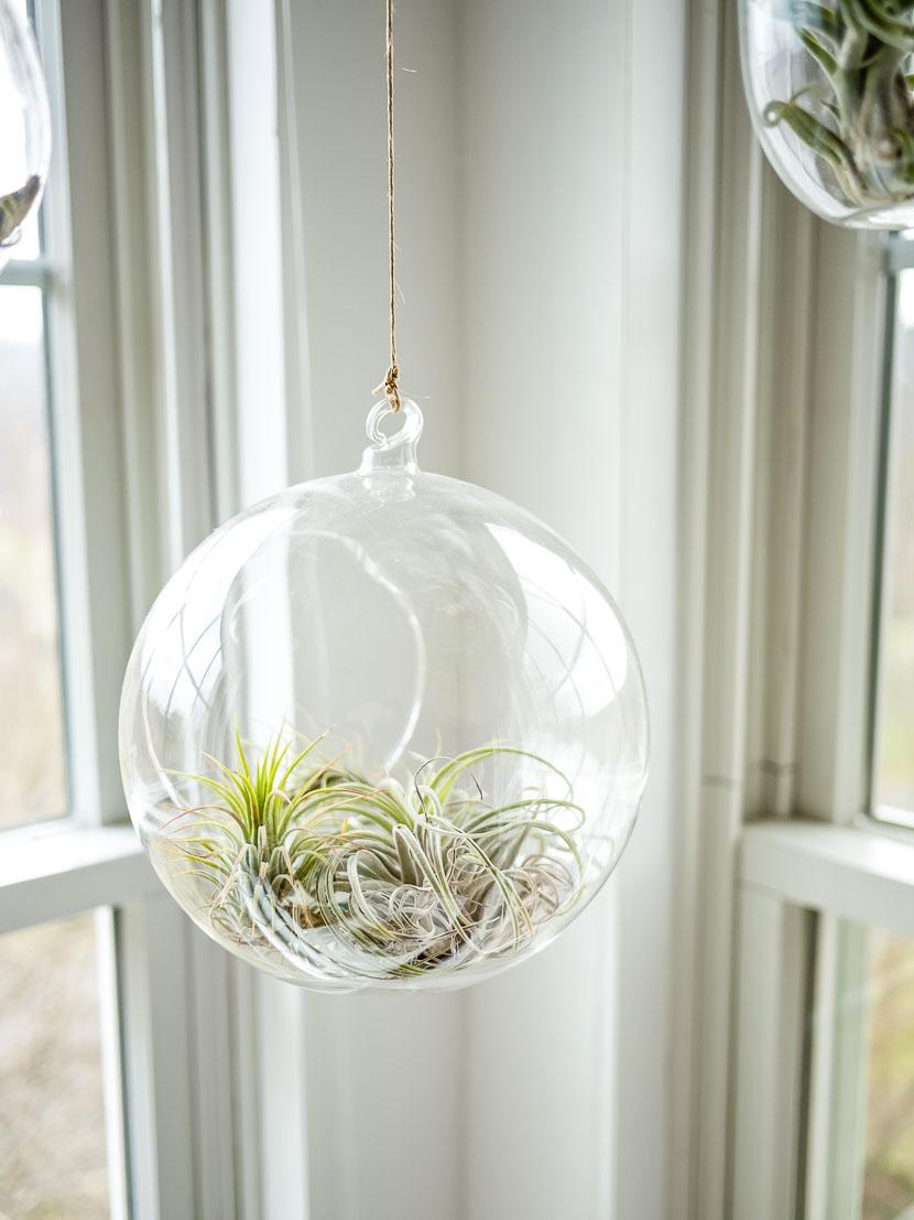 Zimmerpflanzen als Deko-Objekte - meine Favoriten 6