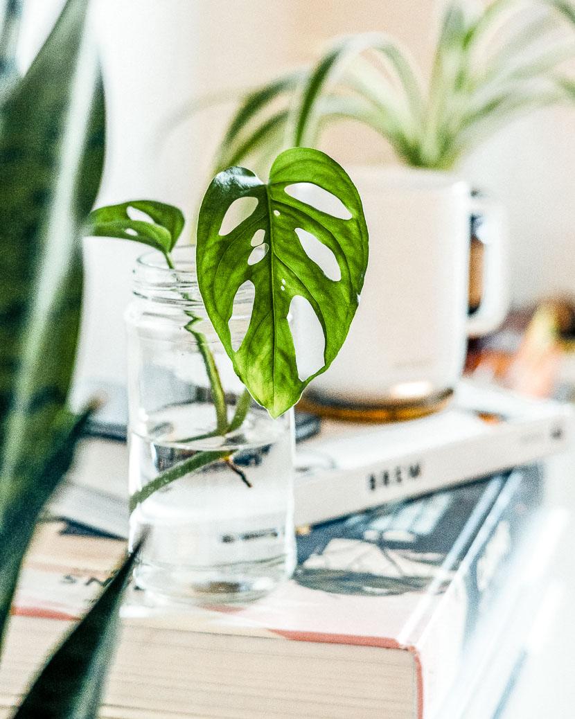 Zimmerpflanzen als Deko-Objekte - meine Favoriten 1