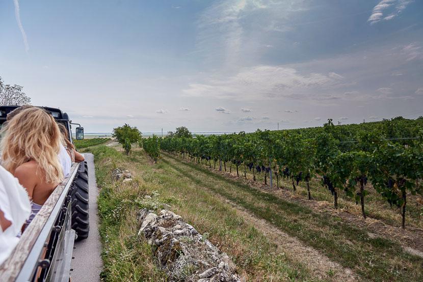 Ein Blick hinter die Kulissen: Weingut Leo Hillinger #hoferweinreise* 1