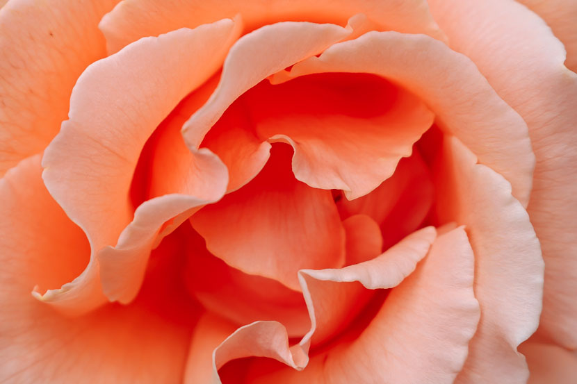 Living Coral - die Trendfarbe 2019 für Fashion und Beauty, Pantone Farbe des Jahres 2019, anregendes und lebensbejahendes Orange mit goldenem Unterton, diese Farbe tragen wir 2019, Koralle in der Fashionszene, pastellige Farbabstufung, Wie style ich Living Coral?, Living Coral in der Beauty-Welt, www.amigaprincess.com