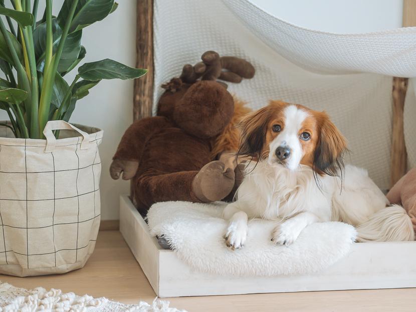 5 Tipps für einen sauberen Haushalt mit Hund* 8