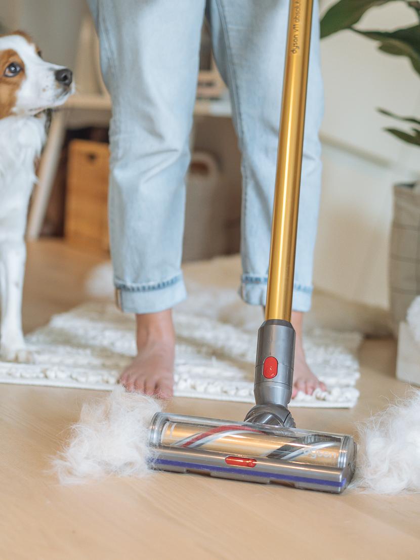 5 Tipps für einen sauberen Haushalt mit Hund* 3