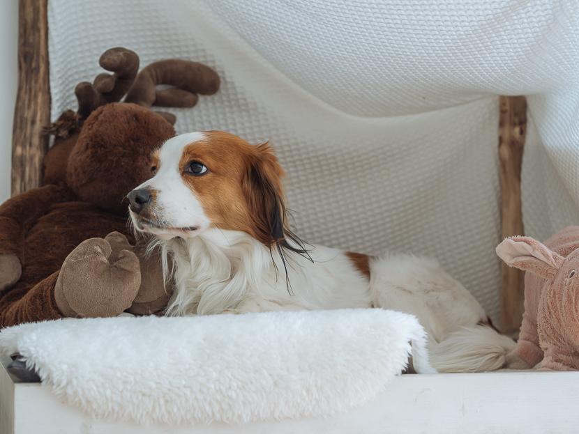 5 Tipps für einen sauberen Haushalt mit Hund* 1