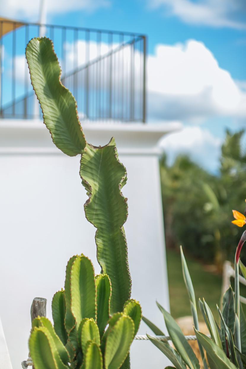 Ibiza in der Nachsaison - das solltest Du wissen 9
